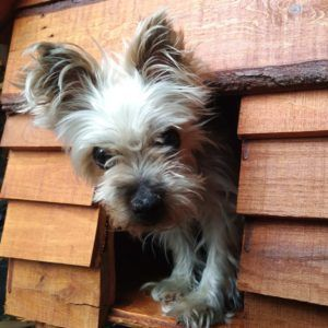 Wood Plank Dog House Build Dog Facts Wood Dog House Dogs
