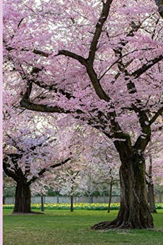 Journal Cherry Blossom Tree By Plainsimplebooks Https Www Amazon Com Dp 1705546250 Ref Cm Sw R Pi Dp U X 3cuxdb573p2x Cherry Blossom Tree Blossom Trees Tree