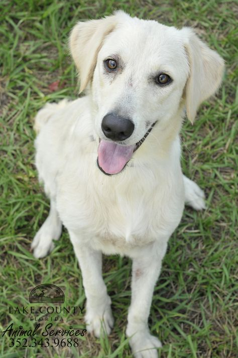 Adopt Bella on Rescue dogs, Animal help, Dog love