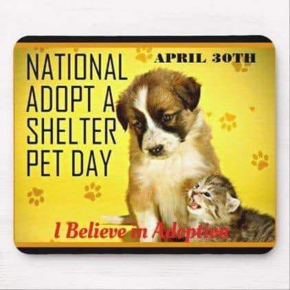 Pin By Cyndy Dent Brooks Fetty On Animal Advocacy Pet Day