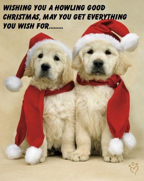 Kingfisher Carte de Noël-Christmas Wishes to the dog