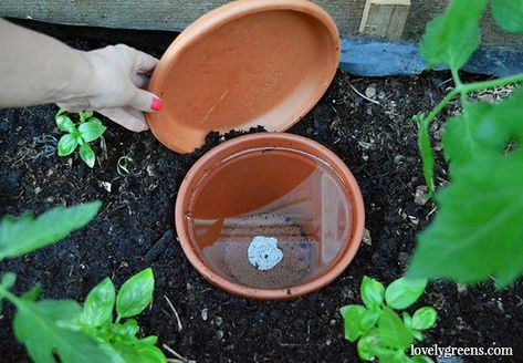 How to make DIY ollas: self-irrigation systems for plants .-So machen Sie DIY-Ollas: Selbstbewässerungssysteme für Pflanzen How to make DIY ollas: self-irrigation systems for plants, # auto irrigation systems -