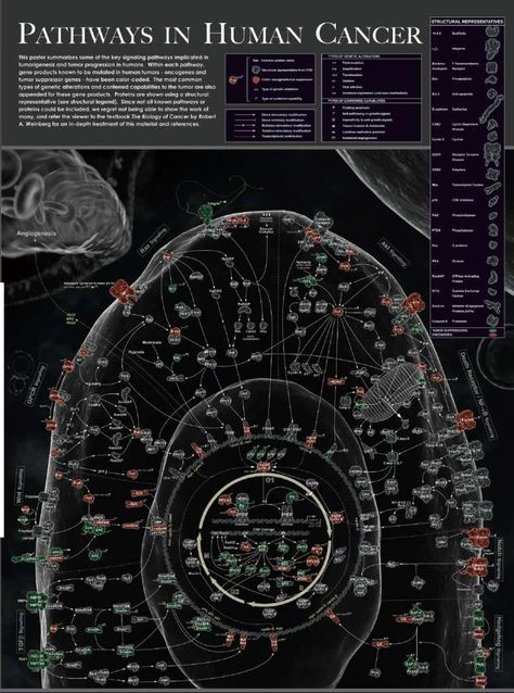 The Pathways of Cancer - Preview.