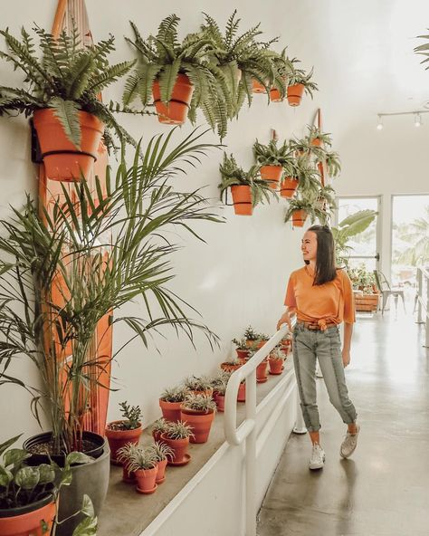 """Haley Pham on Instagram: """"one day when I get a house, plants are going to be everywhereeee 🌱"""""""