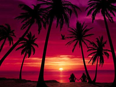 Romantic Tropical Sunset Love Summer Beach Red Ocean Nature Sea Vacation Palm Tree
