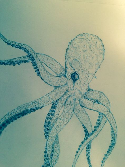 Octopus Sketch Lt Art Pinterest Octopus Sketch