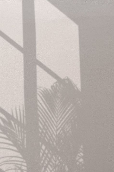 Download free image of Background with palm tree and window shadow 2905469