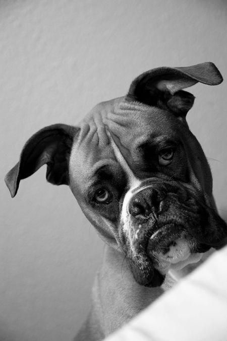 You Wanna Take It Outside Buddy Dogs Pets Boxers Facebook Com Sodoggonefunny Boxer Dogs Dog Photography Dogs