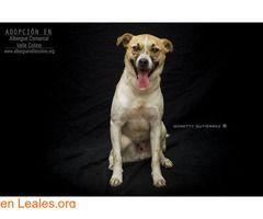 Perros Ya Adoptados España Santa Cruz De Tenerife Tenerife Kinki Adoptado Albergue Valle Colino Trend Animals Dogs