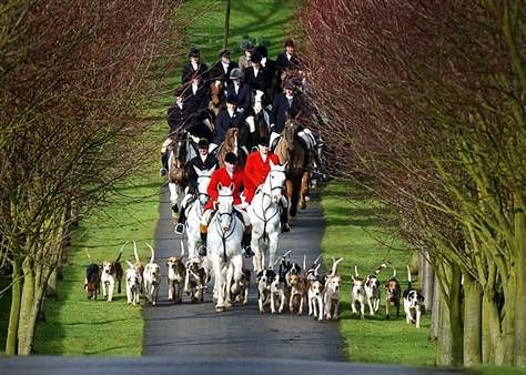 English fox hunting....i so would do this lol just for fun