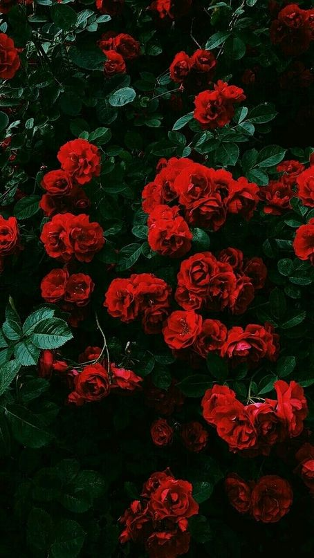 Mywalls Flower Iphone Wallpaper Wallpaper Iphone Roses Preppy