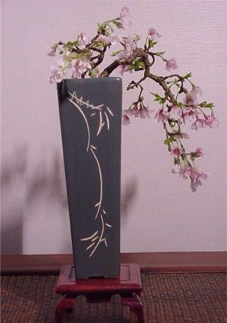 Prunus Incisus Kojo No Mai Fuji Cherry Bonsai Cherry Bonsai Bonsai Tree Bonsai