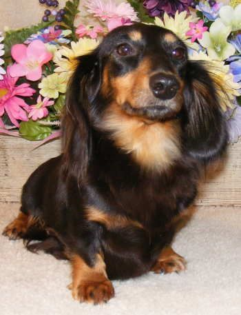 If You Love Dachshunds Visit Our Blog To Find The Best Products