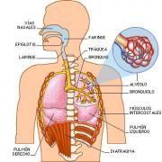 enfisema pulmonar enfermedad profesional