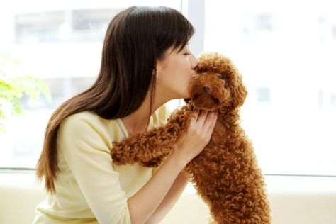 4 ways to keep your pets breath fresh
