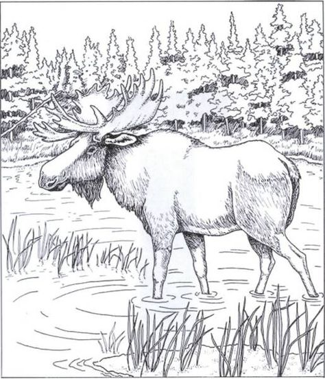 coloring pages moose.html