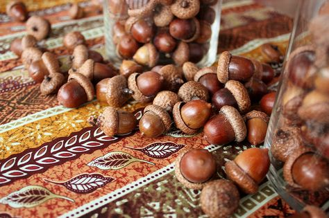 how to dry acorns to use for decoration