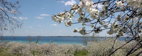 Blue Sky And Cherry Trees Leelanau Peninsula Michigan Nut Photography In Traverse City Michigan Lake Leelanau Leelanau Peninsula Pure Michigan