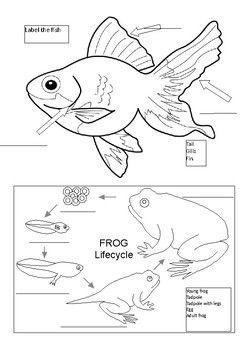 This Is A Labeling Activity To Be Used With Leo Lionni S Book Quot Fish Is Fish Quot Student Can Label The Parts Of A Fish And The Frog Life Cycle This Can