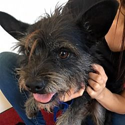 Pin By Marta Iturribarria On Small Breed Dogs Urgent Rescue
