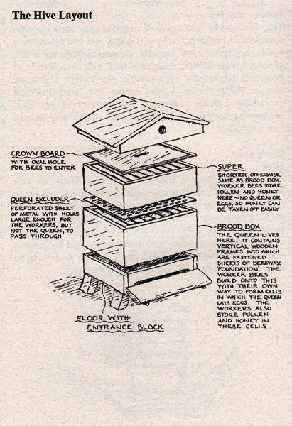 The Kitchen Garden Beekeeping For Beginners Gardening For