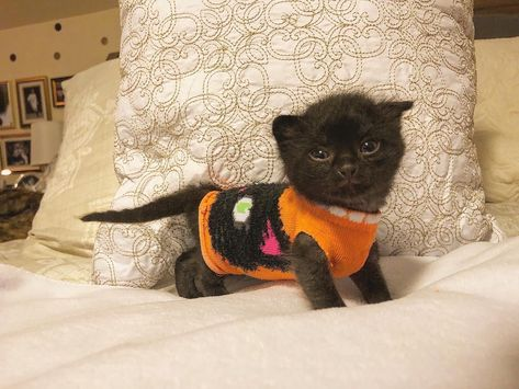 #Positivethings  - Kitten putting on a sock – mind-boggling On #awesome #picoftheday #adorable #happy More