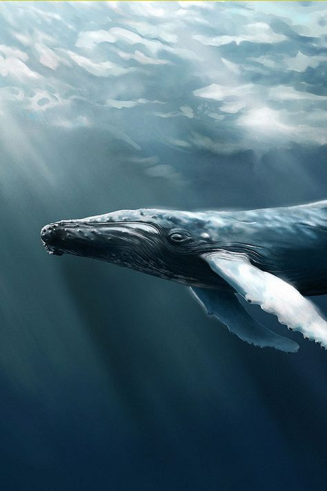 Humpback Whale Download Iphone Ipad Wallpaper At Freeios7