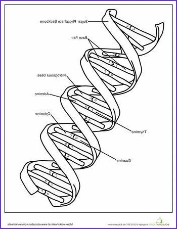 12 Awesome Dna The Double Helix Coloring Worksheet Answers Photography Color Worksheets Family Coloring Pages Coloring Pages For Kids