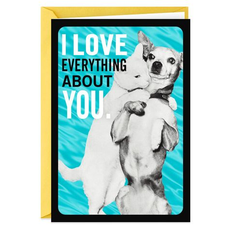 Cat and Dog Funny Anniversary Card