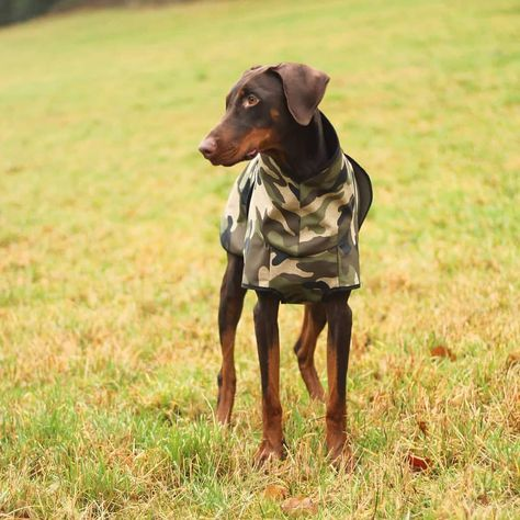 BLITZANGEBOT!!!! NUR BIS ZUM 25.08.2019  ZUM KAUF EINES MANTELS SCHENKEN WIR EUCH DAS PASSENDE HALSTUCH DAZU!!! www.quinnzel-dogwear.de  #quinnzeldogwear #dog #dogwear #hund #hundemantel #handmade #dogfashion #dogcoats #lovemydog #lovemydoberman #ilovemydog #dogslife #dogsarejoy #dogsarefamily #dogsarelove #DogsMostWanted #dogstyle #herbstlook #hundezubeör #onlin
