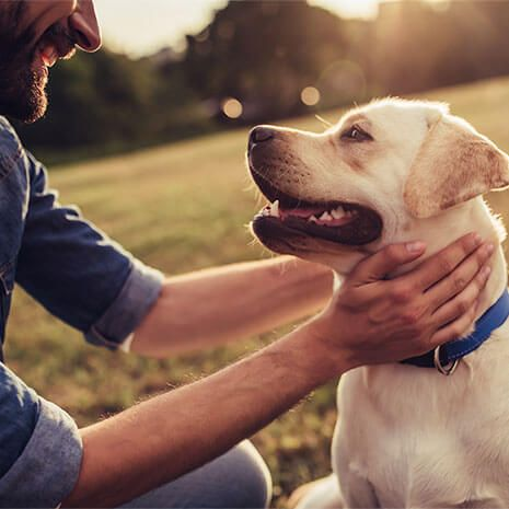 Pet Insurance For Dogs And Cats Animal Insurance Petplan Dog Insurance Puppy Insurance Pet Insurance For Dogs