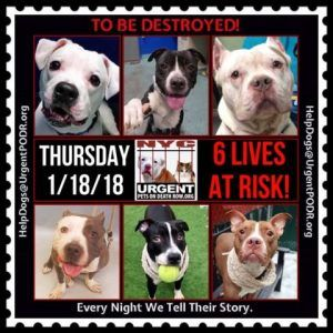 Dedicated To Saving Nyc Shelter Animals List Of Animals Cat Years Dogs