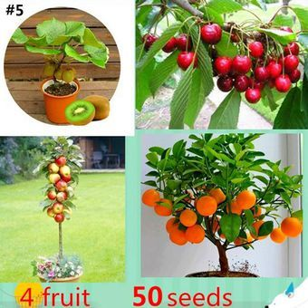 Barbados Cherry/Aceorla/Guyana Cherry Tree in 2019 | fruit