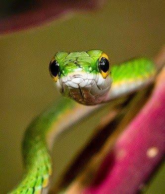 32+ Hewan reptil ular terbaru