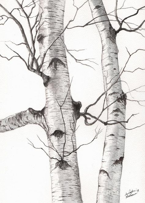 Birch Trees Painting - Two Wild Birch Trees In Watercolor by Christopher Shellhammer art design landspacing to plant Birch Trees Painting, Birch Tree Art, Tree Paintings, Watercolor Trees, Watercolor Paintings, Pen And Watercolor, Tree Drawings Pencil, Tree Pencil Sketch, Tree Sketches