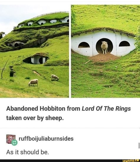 Picture memes 1 comment iFunny Abandoned Hobbiton from Lord Of The Rings taken over by sheep ruffboijuliaburnsides As it should be popular memes on the s. Stupid Funny Memes, The Funny, Hilarious, Funny Tweets, J. R. R. Tolkien, Dump A Day, Funny Pictures, Funny Pics, School Pictures
