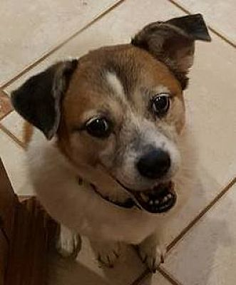 Orlando Fl Pug Meet Gretal Maggie A Dog For Adoption