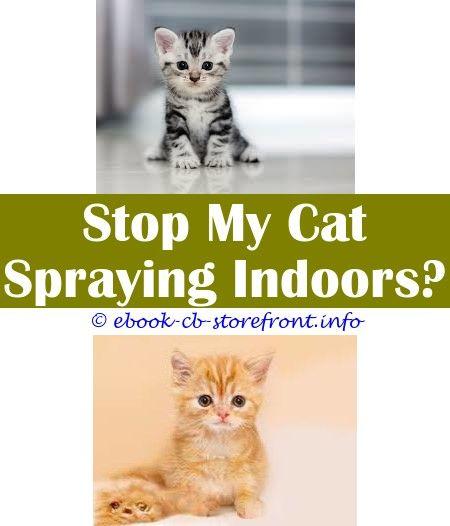 Dream Of Cats Spraying