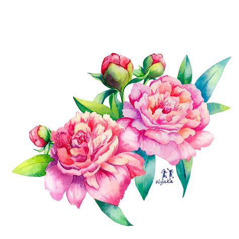 Watercolor pink peonies on Behance
