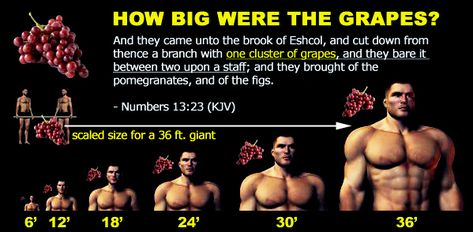 conspiracy of tall men | How tall were the Giant Anakim? Out with the biblical scholars; in ...
