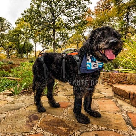 dallasdogphotographer It's #givingtuesday ! This...