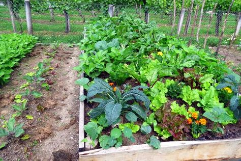 How to Plan a Vegetable Garden? The Unlimited Guide for