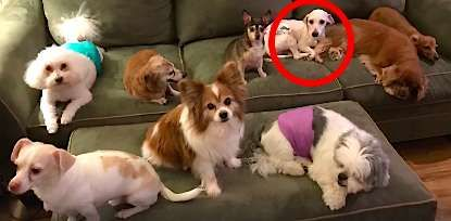 Distressing Moment Dog Rescued From Puppy Mill Didn T Even Know