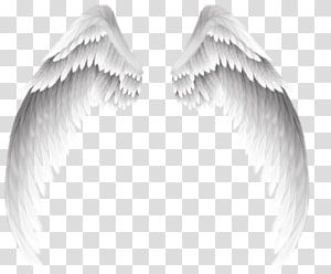 Wing White Wings Transparent Background Png Clipart Clip Art Angel Illustration Angel Wings Illustration
