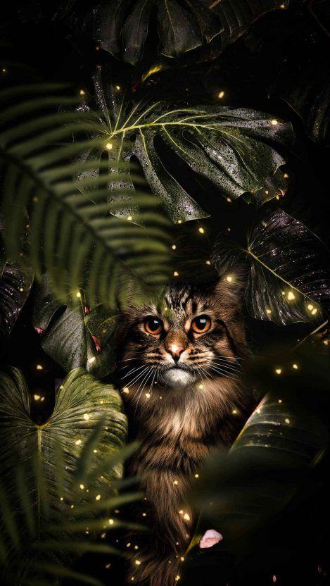 The Predator Iphone Wallpaper Iphone Wallpapers Iphone Wallpaper Cats Iphone Android Wallpaper