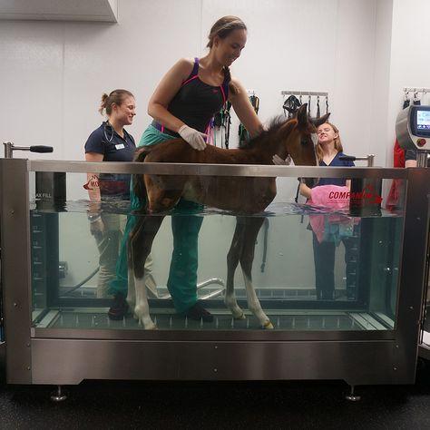 sometimes they are born needing physical therapy for bone health. Veterinary World, Veterinary Medicine, Luxury Horse Barns, Vet Jobs, Wildlife Biologist, Pet Vet, Vet Clinics, Future Jobs, Dream Barn