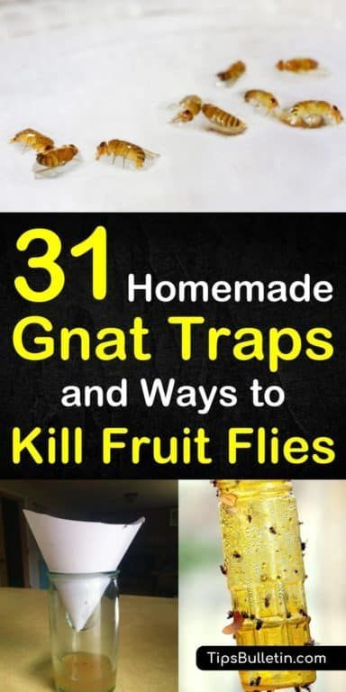 31 Homemade Gnat Traps And Ways To Kill Fruit Flies Homemade Gnat Trap Homemade Fruit Fly Trap Gnat Traps