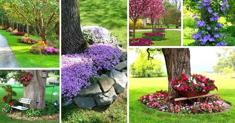 22 Beautiful Flower Beds Around Trees