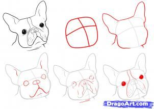 How to draw a boston terrier...although this looks a little like a frenchie