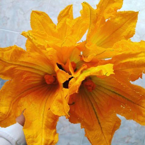 Mazzo Fiori Di Zucca.Il Mazzo Di Fiori Che Tutte Le Donne Desiderano Flowers